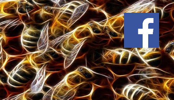 FaceBook Group: Bee Venom Therapy for Lyme Disease